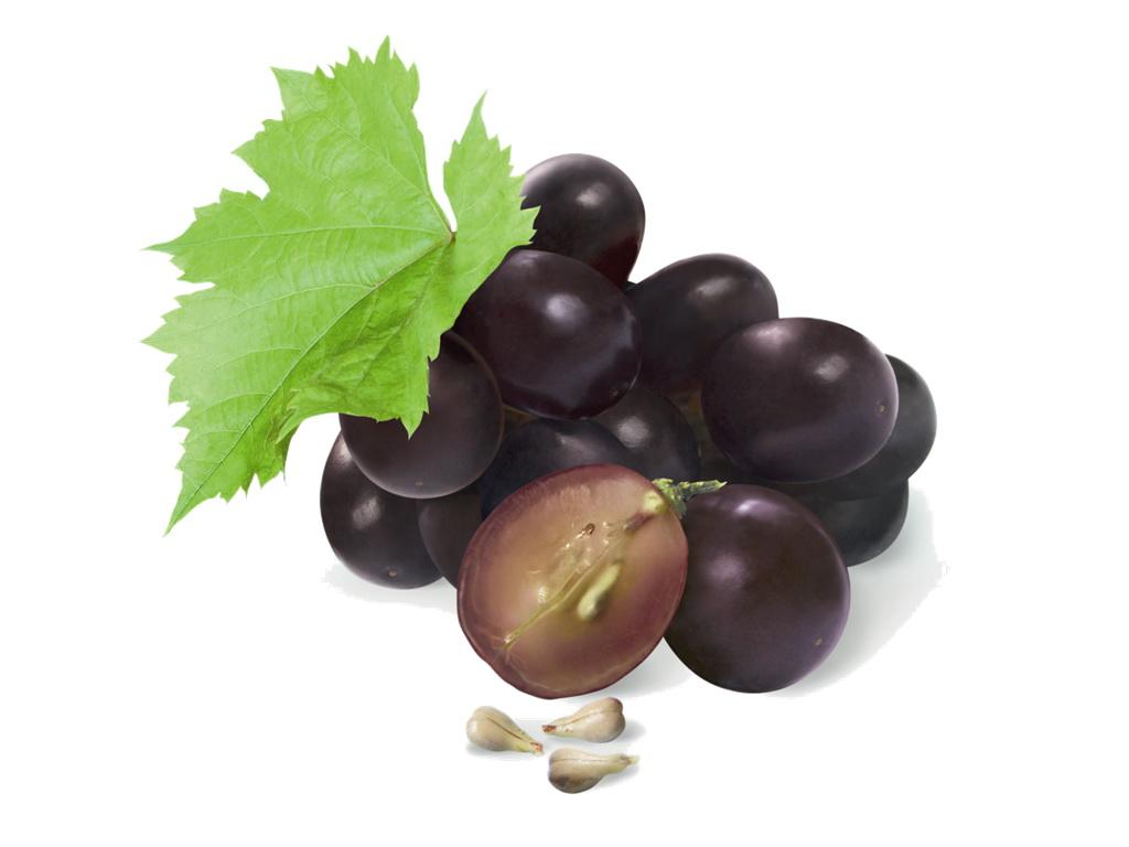 สารสกัดองุ่น (เมล็ด) (Grapes seeds extract)