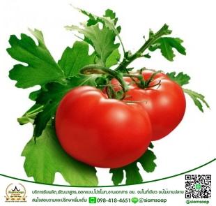 สารสกัด มะเขือเทศ (Tomato Extract)