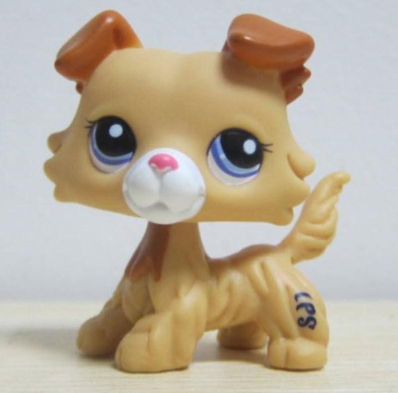 สุนัขคอลลี สีน้ำตาล ตาสีม่วง (#2452)