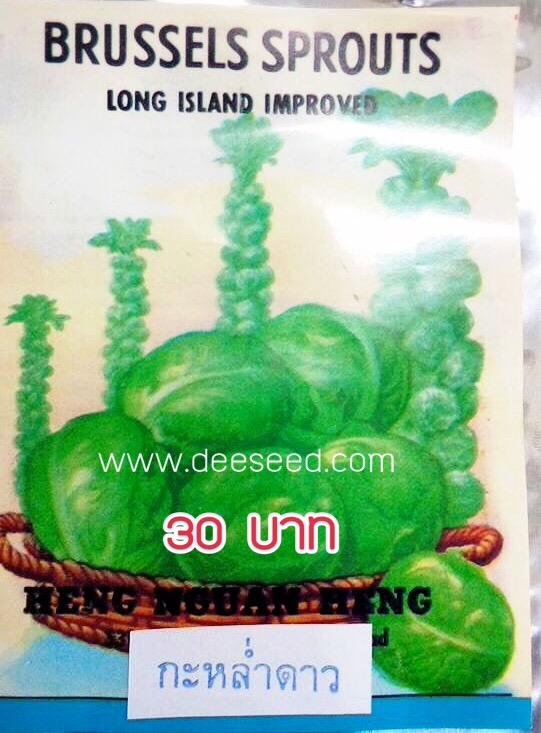 กะหล่ำดาว Brussels Sprouts (ประมาณ 200 เมล็ด)